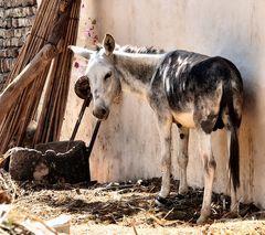 Genauso traurig wie der Esel schaut, ist zur Zeit Kerstin…