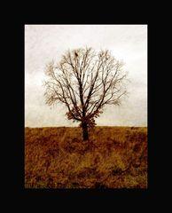 Genealogically Autumn