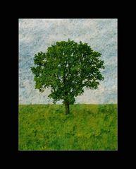 Genealogically Spring