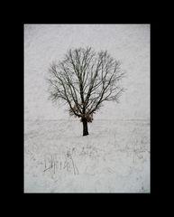 Genealogically Winter