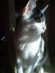 ***Genieß die Sonne, kleiner Tiger***