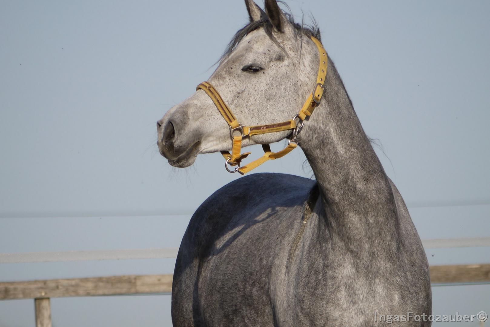 Genießer-Pferd