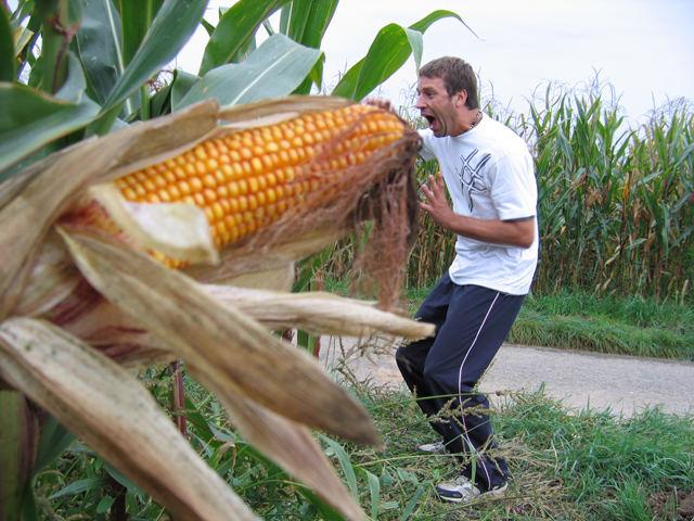 Genmanipuliert oder Bauers Liebe?