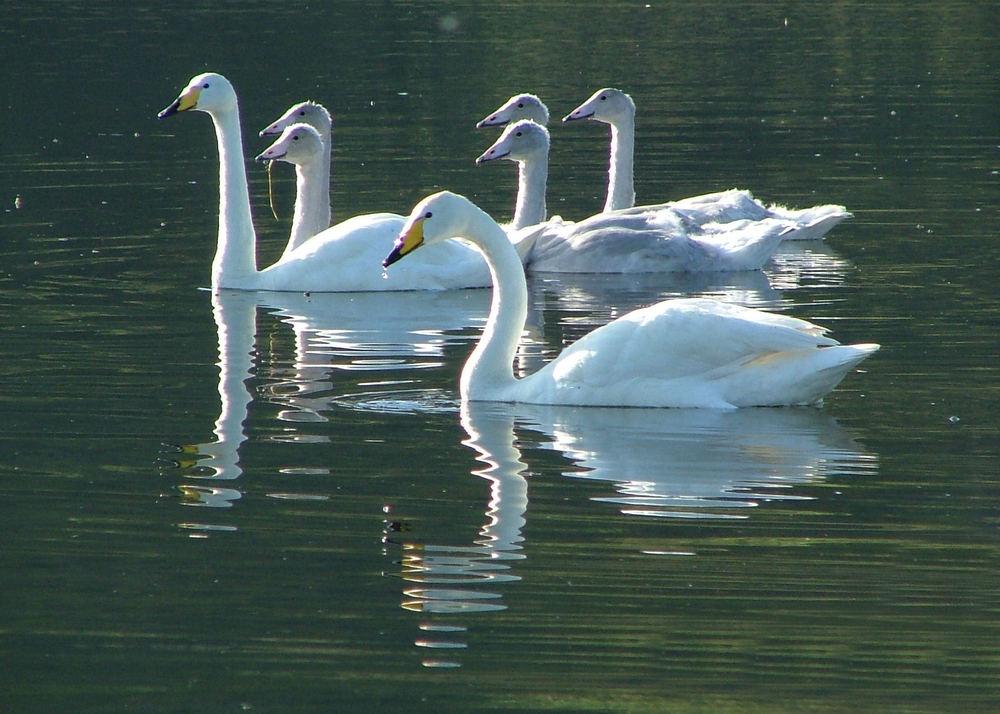 Gentle family
