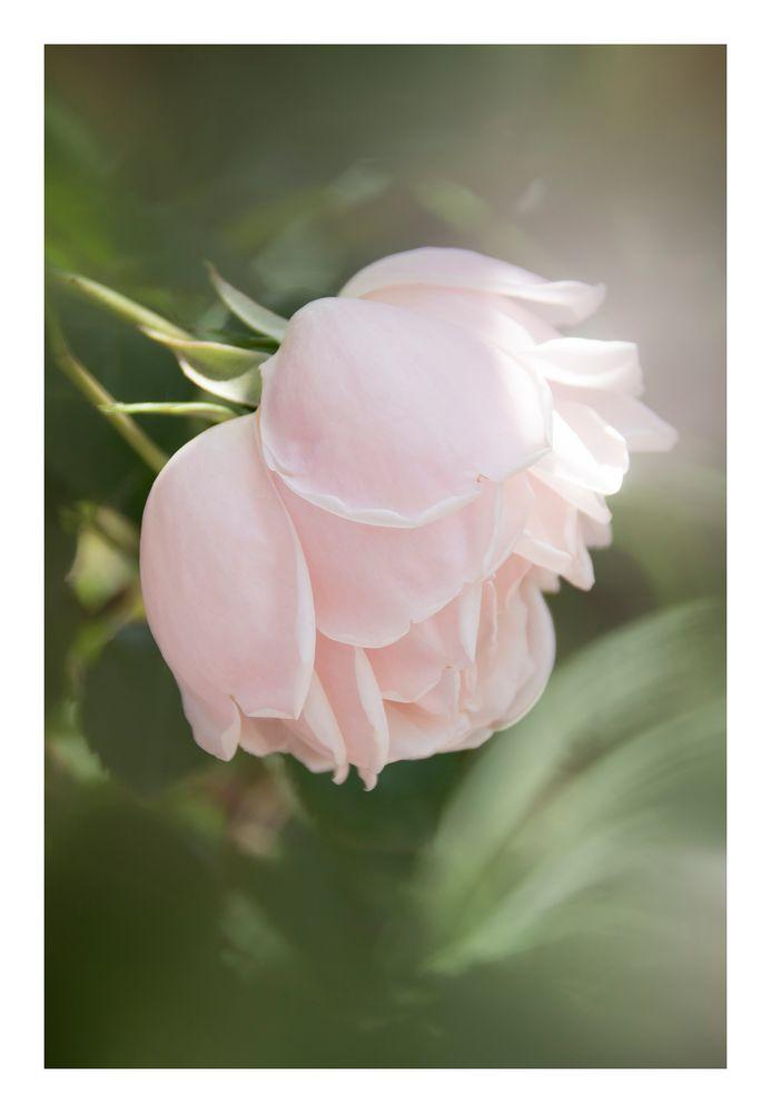Gently speak flowers-1