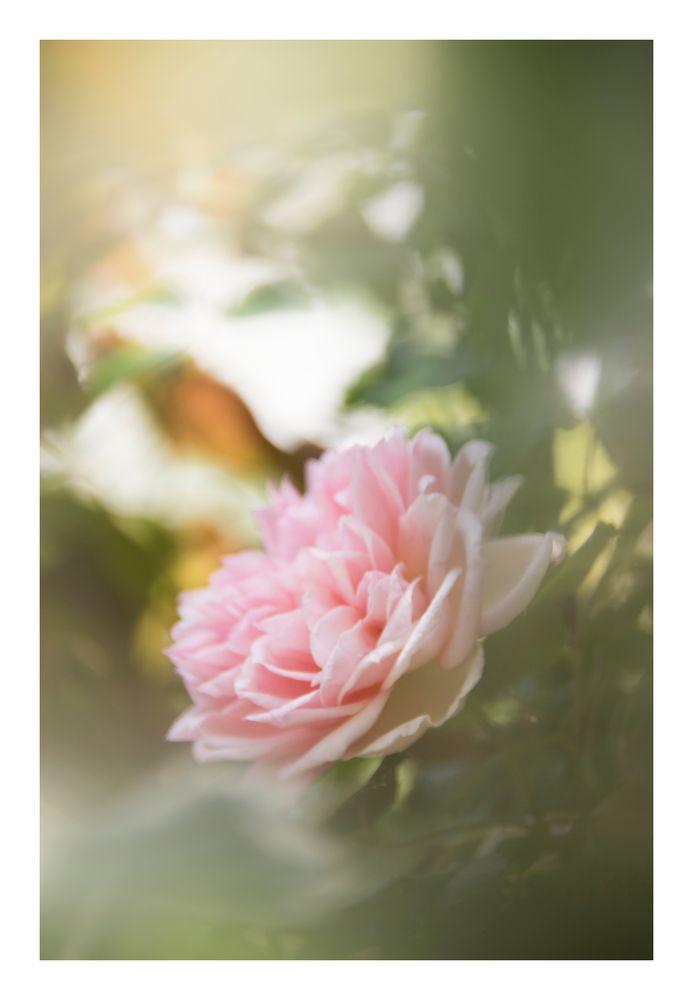 Gently speak flowers-5
