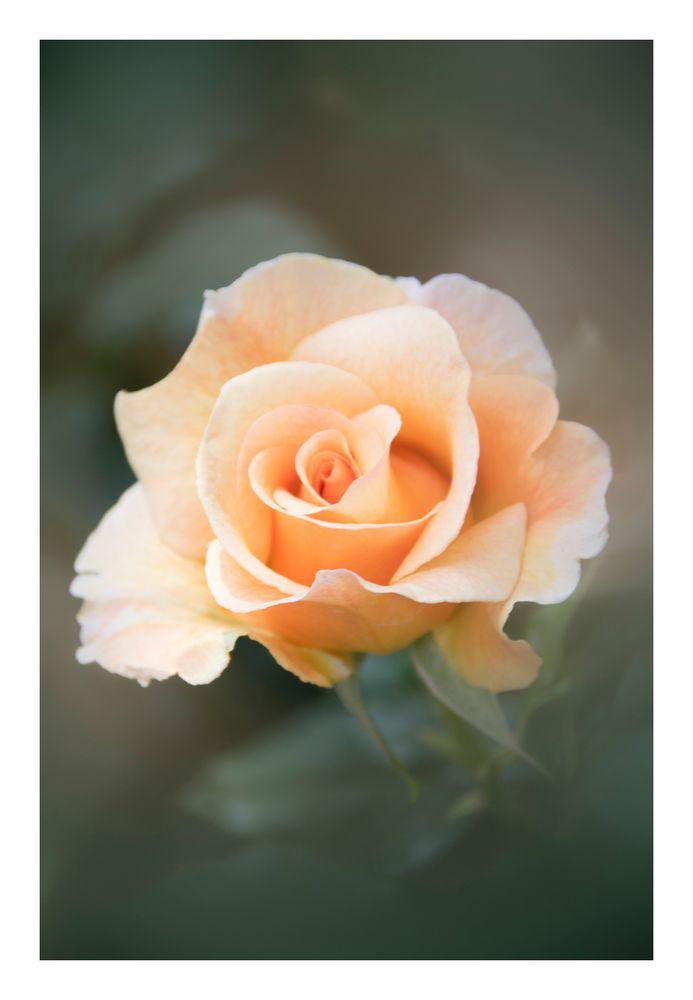 Gently speak flowers-6