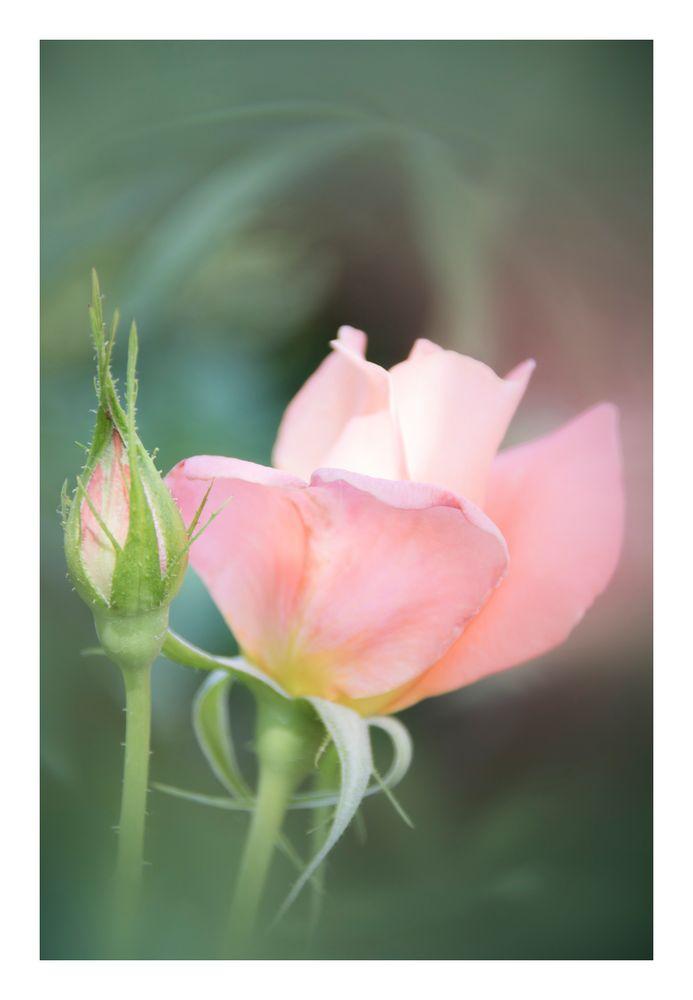 Gently speak flowers-7