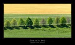 Geometrie der Natur II