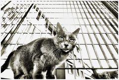 geometrie feline