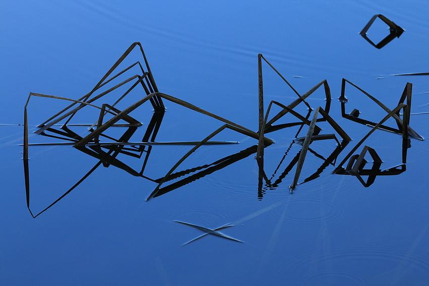 Geometrische Formen in der Natur