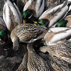 George C Rifle Bird Sanctuary Delta BC