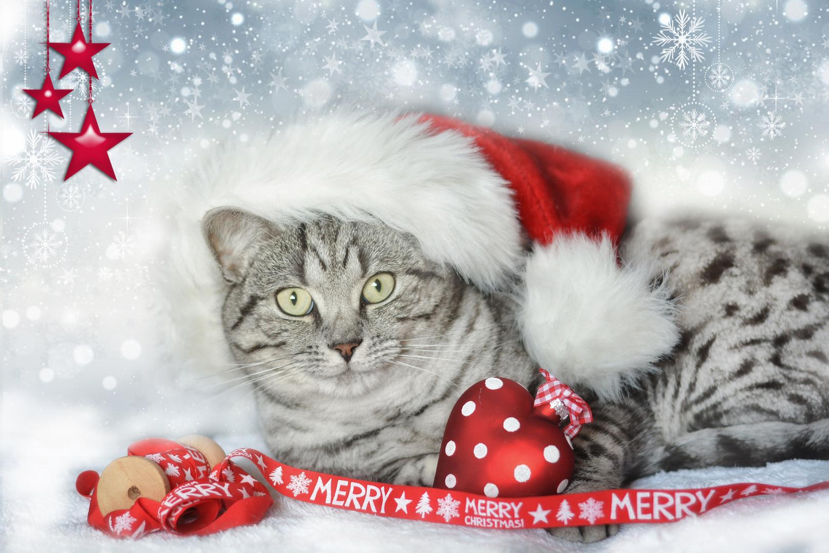 weihnachtsbilder und gr e