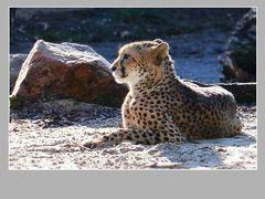 Gepard #2