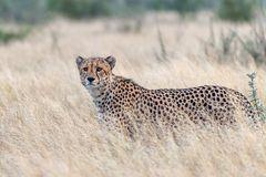 Botswana-Kalahari