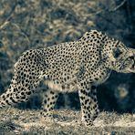 Gepard II