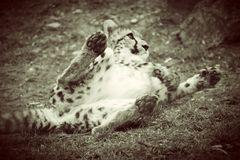 Gepardenteenager in Spiellaune :)