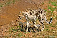 Gepardin mit ihrem Nachwuchs