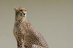 Gepardin Yathi
