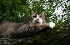 """Gepetto auf einem umgestürzten Baum, sozusagen """"sein Kratzbaum"""""""