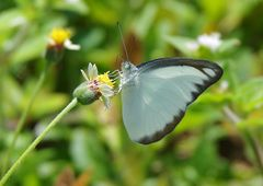 Geradezu ein Schmetterlingsmagnet . . .