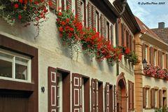 Geranienschmuck an den Häuser des 18. Jahrhundert in Freinsheim