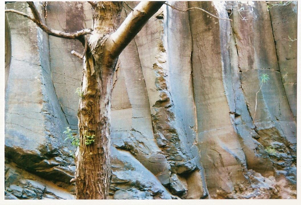 gerippter Fels mit Pflanze