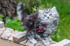 Germanys Next Cat-Model ;-)