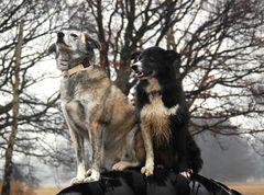 Germanys next Dog-Model
