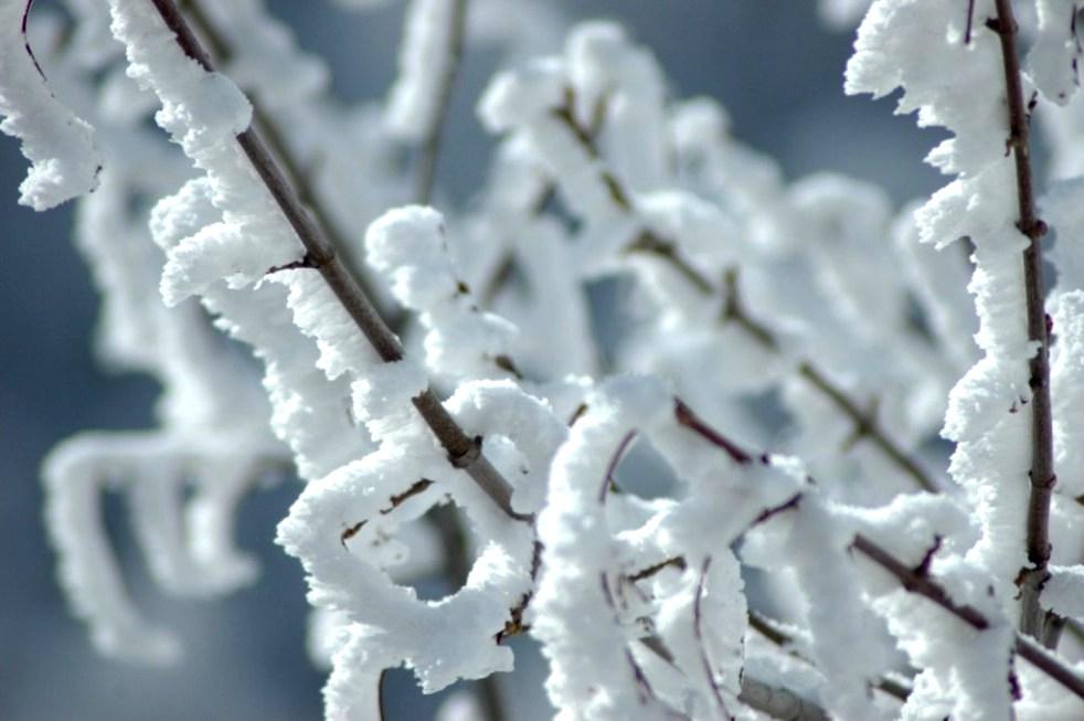 Germogli di neve