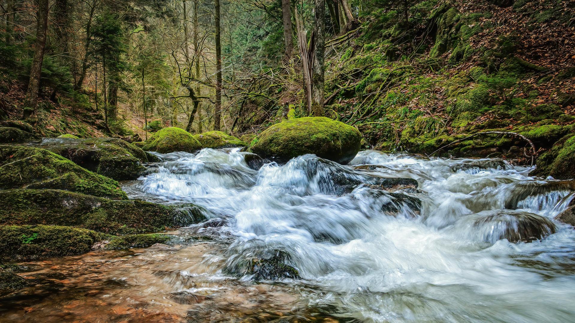 Geroldsauer Wald
