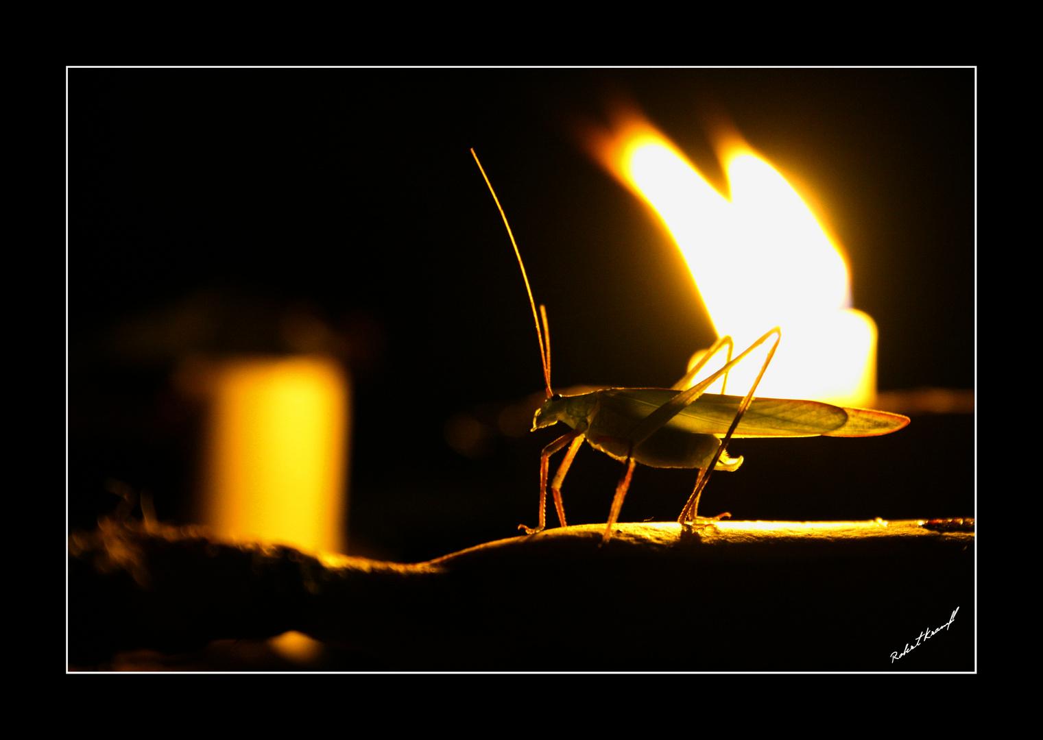 Gerry the Grasshopper
