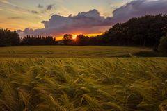 Gerstenfeld bei Sonnenuntergang