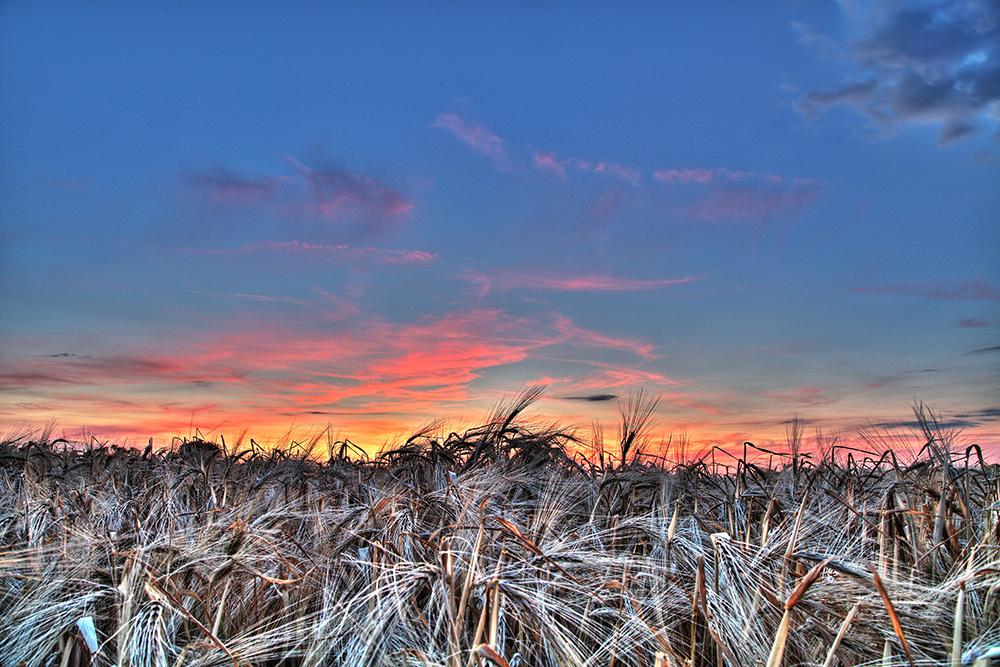 Gerstenfeld und ein toller Sonnenuntergang ;-)