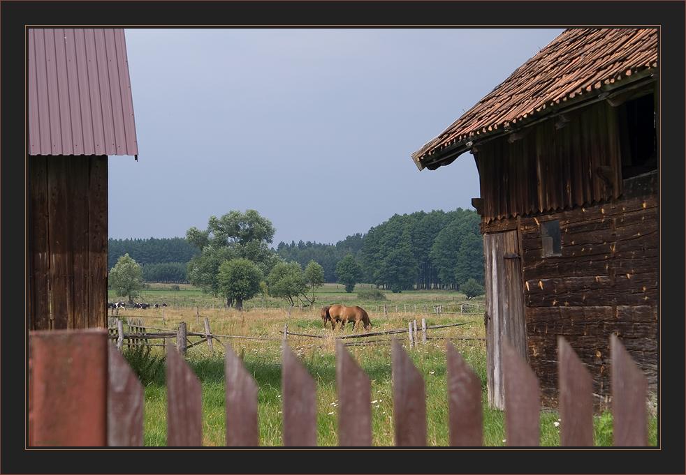 Gertruds Pferdchen