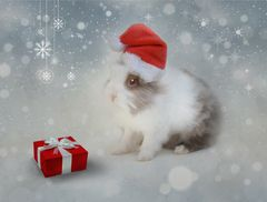 Geschenkshäschen