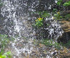 Geschützt hinter dem Wasserfall