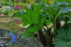 Geschützte Blütenstände