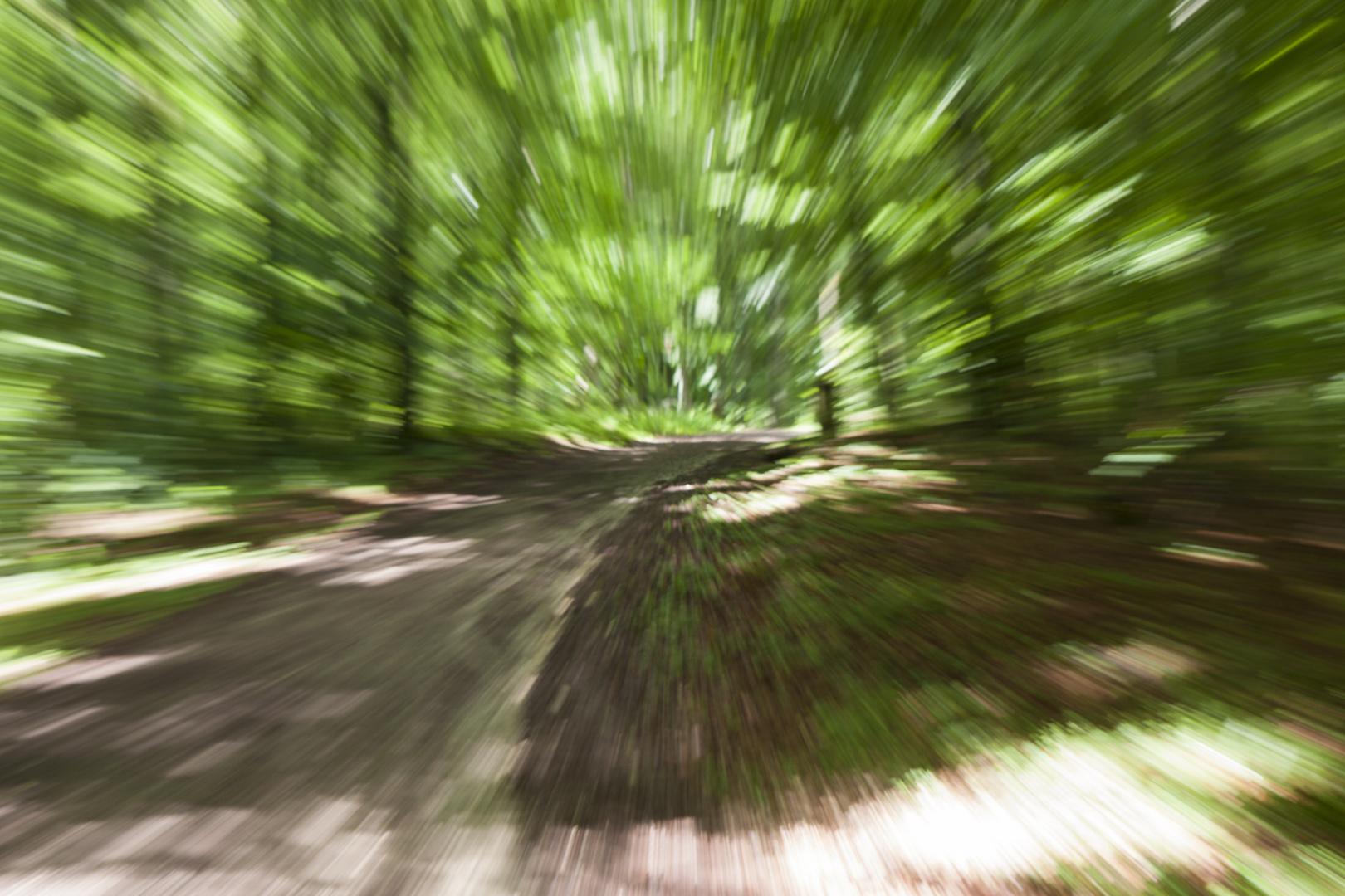 Geschwindigkeitsüberschreitung auf dem Waldweg