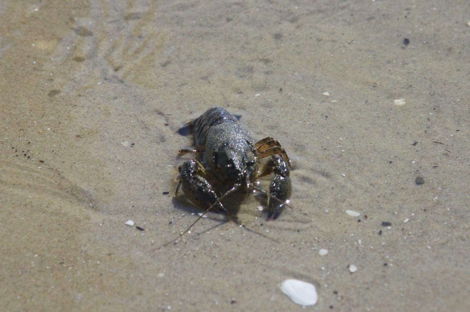 gesehen am Ahlbercker Strand