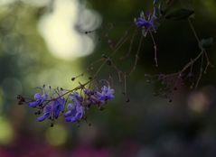 gesehen auf der Blumeninsel Mainau