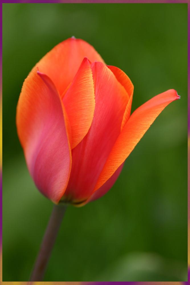 gesehen bei der Tulipan Berlin 2006