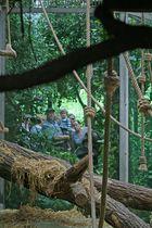 gesehen im Menschenaffenhaus des Kölner Zoos