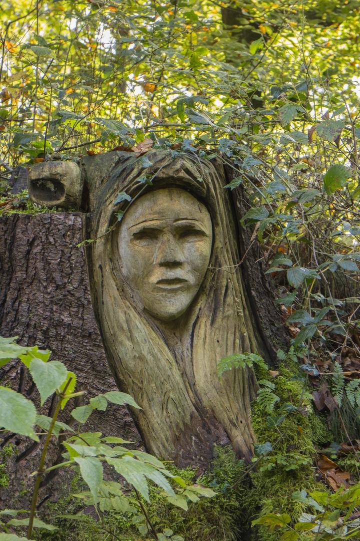 Gesichter des Waldes