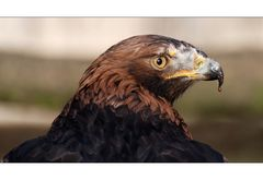 Gesichter im Vogelpark Niendorf [2]