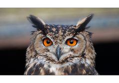 Gesichter im Vogelpark Niendorf [4]