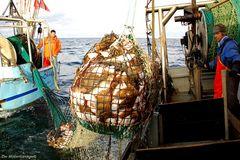 Gespannfischer
