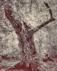 Gespenster Baum