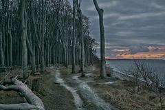 Gespenster im Gespensterwald