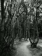 Gespenster Wald Nienhagen